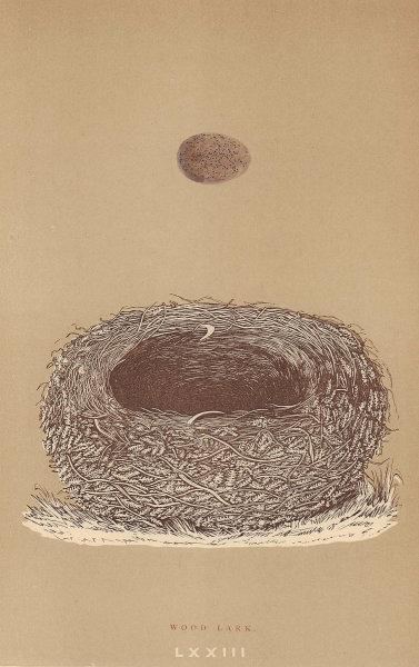 BRITISH BIRD EGGS & NESTS. Wood Lark. MORRIS 1896 old antique print picture