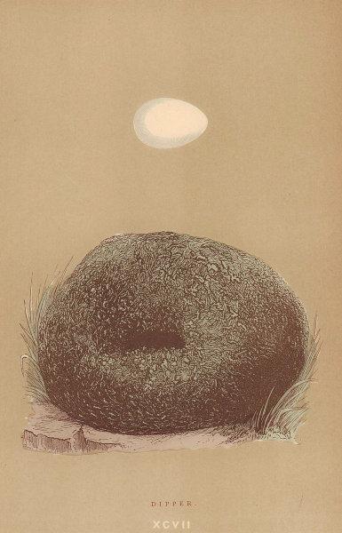 BRITISH BIRD EGGS & NESTS. Dipper. MORRIS 1896 old antique print picture