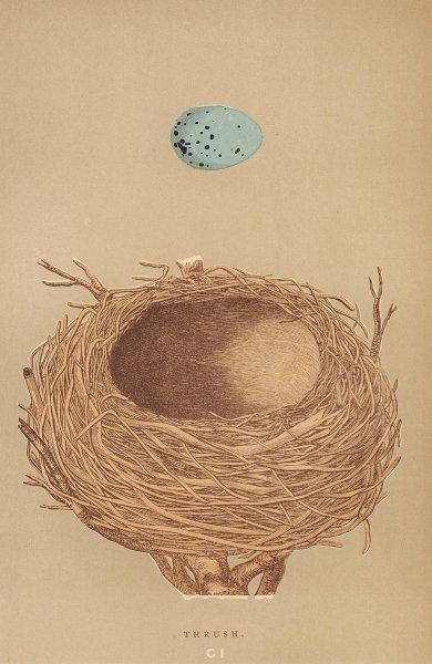 BRITISH BIRD EGGS & NESTS. Thrush. MORRIS 1896 old antique print picture