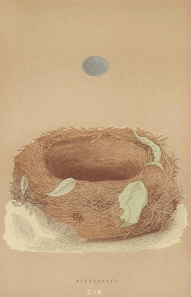 BRITISH BIRD EGGS & NESTS. Bluebreast. MORRIS 1896 old antique print picture