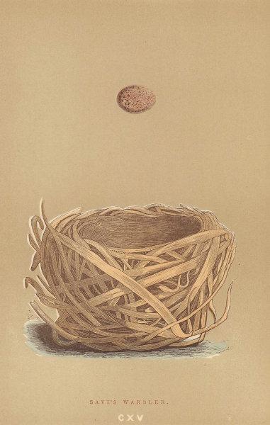 BRITISH BIRD EGGS & NESTS. Savi's Warbler. MORRIS 1896 old antique print