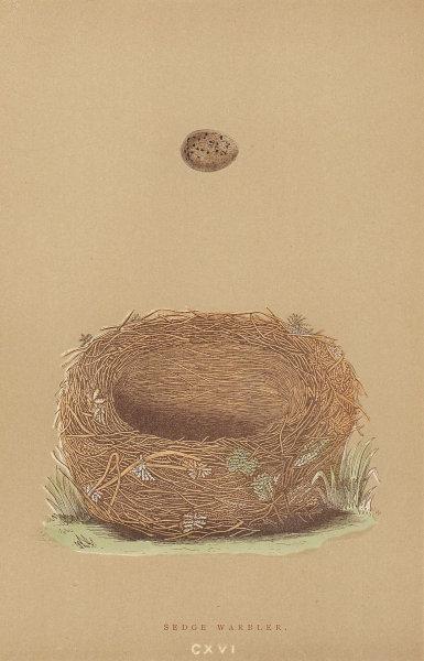 BRITISH BIRD EGGS & NESTS. Sedge Warbler. MORRIS 1896 old antique print