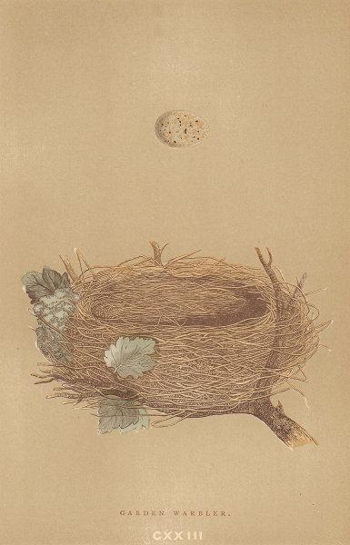 BRITISH BIRD EGGS & NESTS. Garden Warbler. MORRIS 1896 old antique print