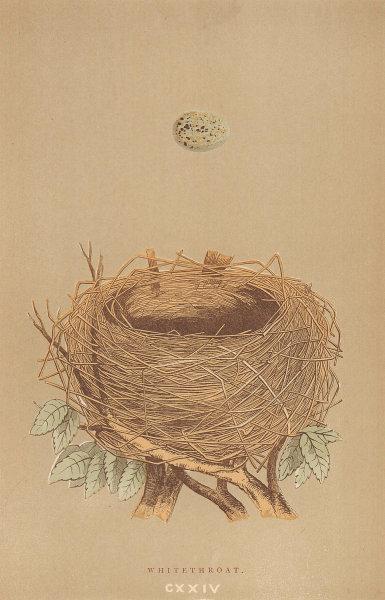 BRITISH BIRD EGGS & NESTS. Whitethroat. MORRIS 1896 old antique print picture