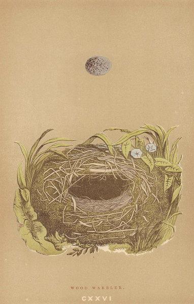 BRITISH BIRD EGGS & NESTS. Wood Warbler. MORRIS 1896 old antique print picture