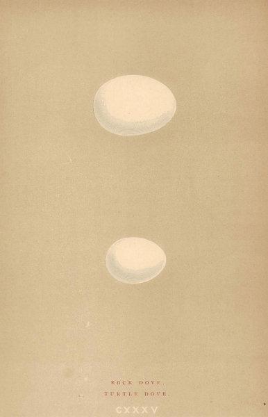 BRITISH BIRD EGGS. Rock Dove. Turtle Dove. MORRIS 1896 old antique print