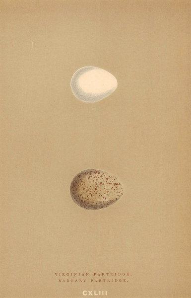BRITISH BIRD EGGS. Virginian Partridge. Barbary Partridge. MORRIS 1896 print