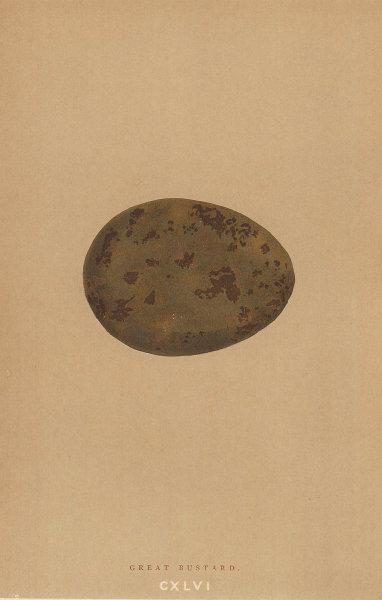 BRITISH BIRD EGGS. Great Bustard. MORRIS 1896 old antique print picture
