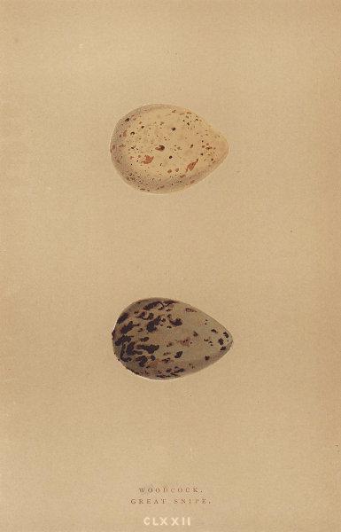 BRITISH BIRD EGGS. Woodcock. Great Snipe. MORRIS 1896 old antique print