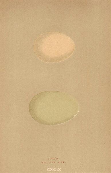 BRITISH BIRD EGGS. Smew. Golden Eye. MORRIS 1896 antique print picture