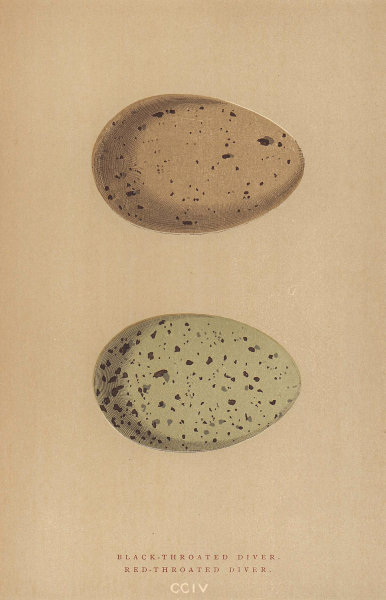 BRITISH BIRD EGGS. Black-Throated Diver. Red-Throated Diver. MORRIS 1896 print