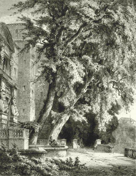 Associate Product ROME. Old Trees in the Villa D'este 1877 antique vintage print picture