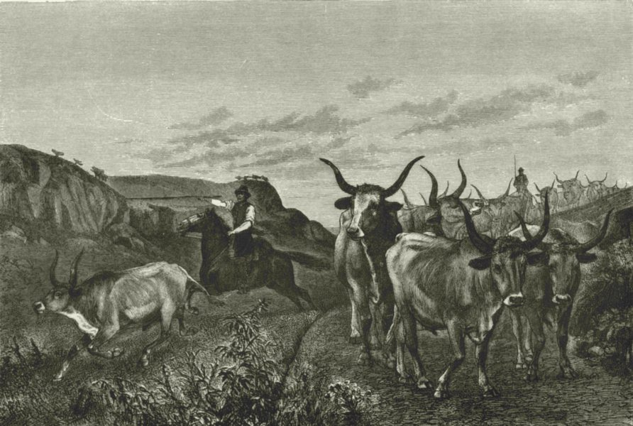 Associate Product ROME. Roman Campagna. Herdsman in the Campagna 1877 old antique print picture