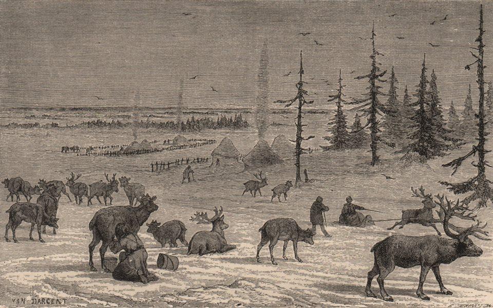 Associate Product ARCTIC. Laplanders and Reindeer 1882 old antique vintage print picture
