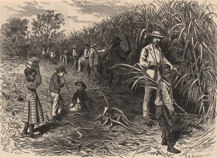 Associate Product WEST INDIES. Scene on a Sugar Plantation 1882 old antique print picture