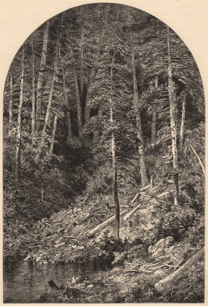 Associate Product PENNSYLVANIA. Pine Forest on west branch of the Susquehanna 1874 old print