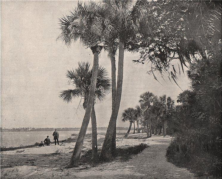 Associate Product Indian River, Florida 1895 old antique vintage print picture