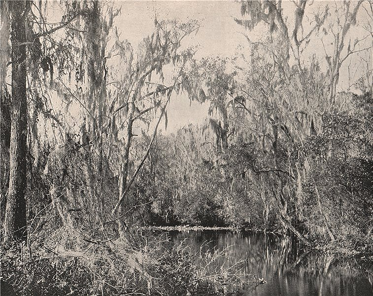 Associate Product Governor's stream, Ocklawaha River, Florida 1895 old antique print picture