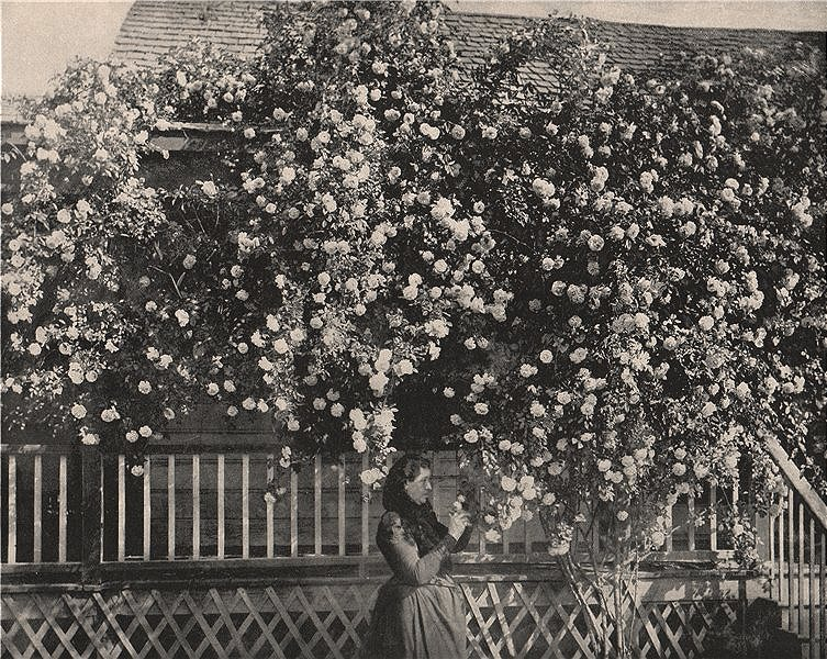 Associate Product A house adorned with roses, Southern California 1895 old antique print picture