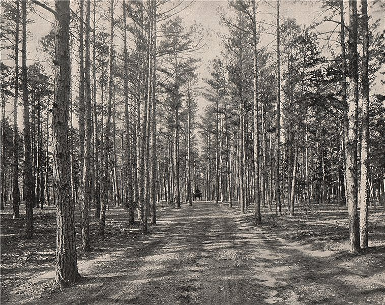 Associate Product Motorable road in the Piney Woods Park, Lakewood, New Jersey 1895 old print