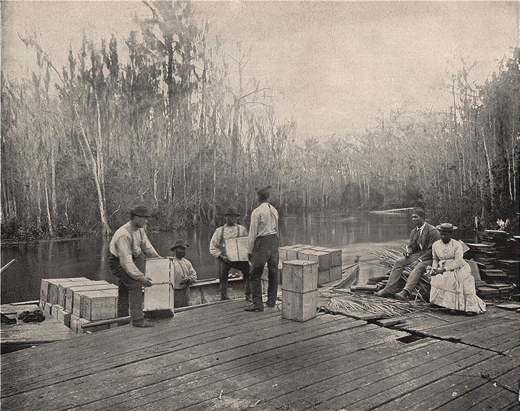 Loading oranges on the Ocklawaha River, Florida 1895 old antique print picture