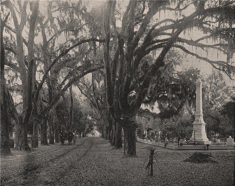 Associate Product Spanish Moss hanging from American oaks, Savannah, Georgia. Horse and wagon 1895
