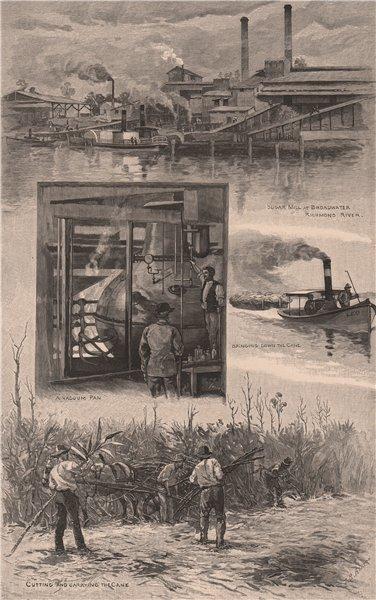 Associate Product AUSTRALIAN SUGAR INDUSTRY. Broadwater Mill, Richmond river. Cane. NSW 1888