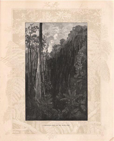 Associate Product A Sassafras gully on the BLACK SPUR. Victoria, Australia 1888 old print