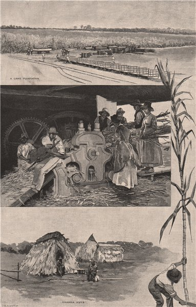 Associate Product QUEENSLAND SUGAR INDUSTRY near Mackay. Cane Plantation. Kanaka Huts 1888 print