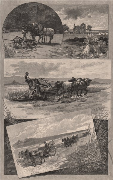 Associate Product Harvesting in SOUTH AUSTRALIA 1888 old antique vintage print picture