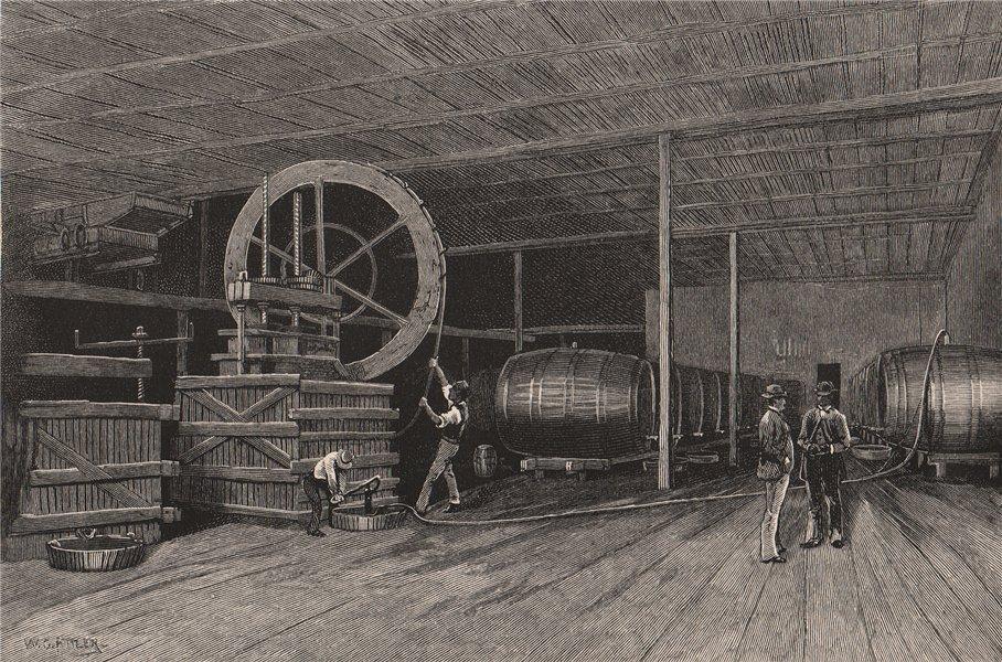 Associate Product The AULDANA Cellar. Adelaide. Australia 1888 old antique vintage print picture