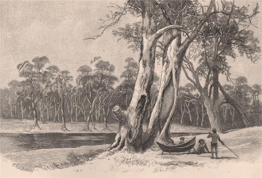 Associate Product Making a bark canoe. Australia 1888 old antique vintage print picture