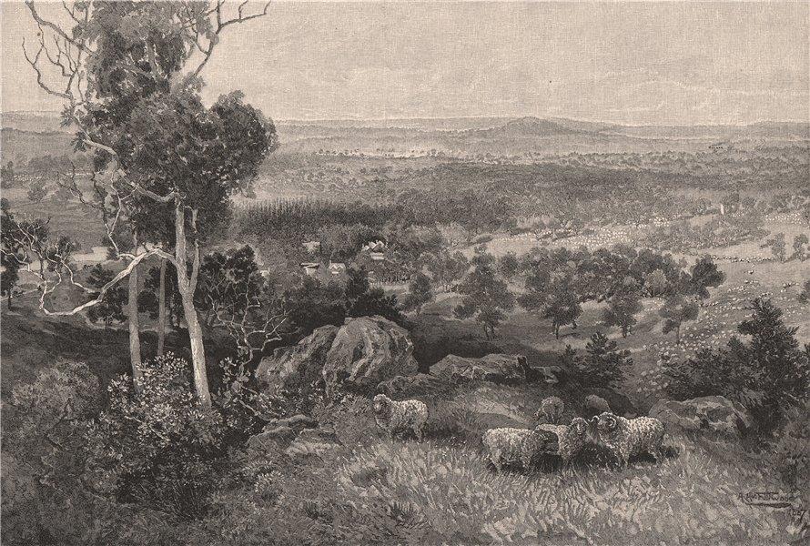Associate Product ERCILDOUNE sheep station, Victoria. Australia 1888 old antique print picture