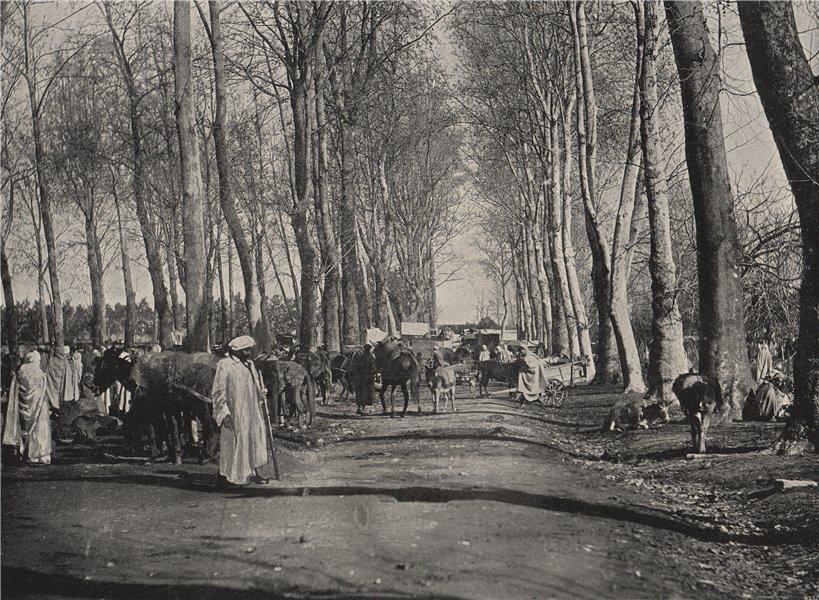 Associate Product BOUFARIK. The Arab fair and market. Algeria 1895 old antique print picture