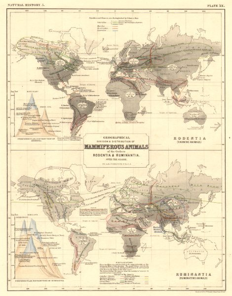 WORLD. Geographical distribution of Mammals Rodentia Ruminantia 1850 old map