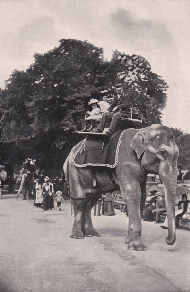 Associate Product Zoological Gardens - Children Riding on the Elephants. London 1896 old print