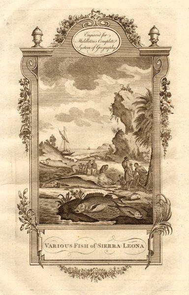"Associate Product ""Various fish of Sierra-Leona"". Sierra Leone. MIDDLETON 1779 old antique print"