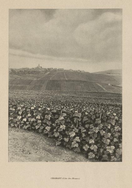 Associate Product Cramant, Côte de Blancs, Champagne vineyards and village 1944 old print