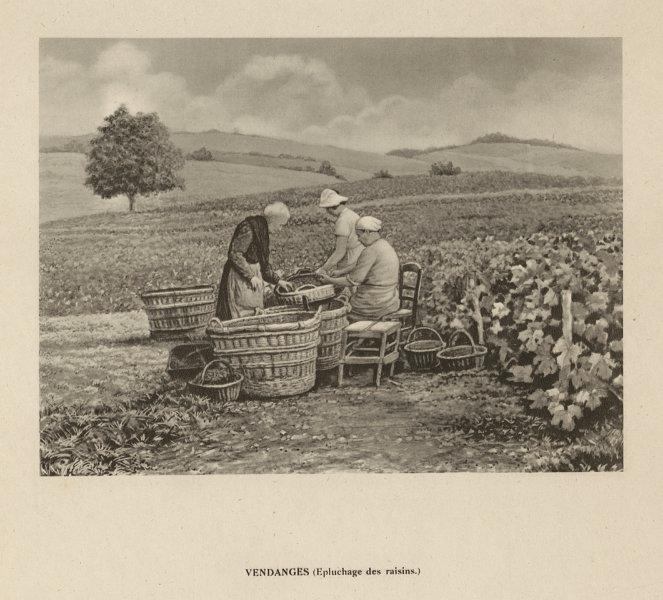 Associate Product Vendanges - Epluchage des raisins. Champagne harvest. Peeling grapes 1944